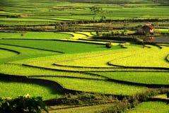 Las curvas del arroz de la terraza colocan en la montaña Imagen de archivo
