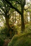 las deszcz Obrazy Stock