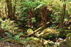 las deszczowy Fotografia Stock