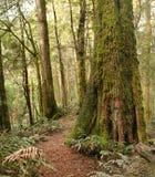 las deszczowy obraz royalty free