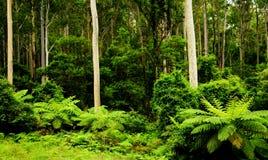 las deszczowy Zdjęcia Royalty Free