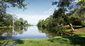 las deszczowy zdjęcie stock