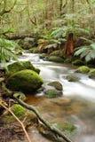 las deszczowy rzeki Obrazy Stock