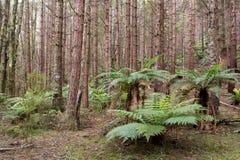 las deszczowy umiarkowanych Obraz Royalty Free