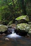 las deszczowy wodospadu Zdjęcia Stock