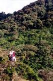 las deszczowy ziplining zdjęcie stock