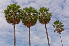 Las diversas tallas de la palma de azúcar Imagen de archivo libre de regalías
