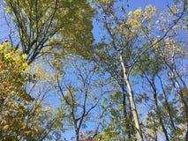 Las, drzewa Fotografia Royalty Free