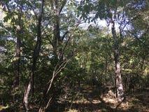 Las, drzewa Obrazy Stock