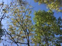 Las, drzewa Zdjęcie Stock