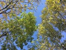 Las, drzewa Obrazy Royalty Free