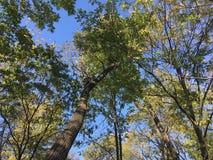 Las, drzewa Fotografia Stock