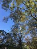 Las, drzewa Zdjęcia Royalty Free