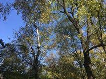 Las, drzewa autumn wcześniej Fotografia Stock