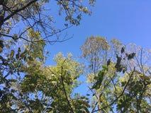 Las, drzewa autumn wcześniej Obraz Stock