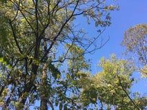 Las, drzewa autumn wcześniej Obrazy Stock