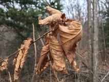 Las, drzewa Bladzi brown żółci liście, zakończenie las jesieni Obraz Stock