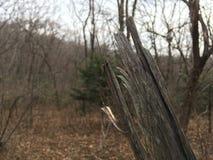 Las, drzewa Drzewny czerep, zakończenie las jesieni Zdjęcia Stock