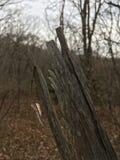 Las, drzewa Drzewny czerep, zakończenie las jesieni Zdjęcie Stock