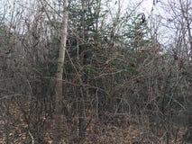 Las, drzewa las jesieni Zdjęcie Royalty Free