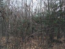 Las, drzewa las jesieni Zdjęcia Royalty Free