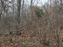 Las, drzewa las jesieni Fotografia Stock
