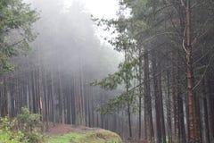 Las, drzewa mech zdjęcia stock