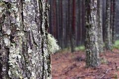 Las, drzewa mech fotografia royalty free
