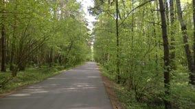Las, drzewa, zwarta roślinność, drogowi cykliści, przespacerowanie, lato, plenerowy odtwarzanie, skrzyżowanie, drogowi znaki Zdjęcia Stock