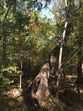 Las, drzewo Zdjęcie Royalty Free