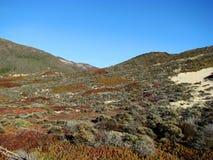 Las dunas de arena en la bahía de Monterey varan, California Imagenes de archivo