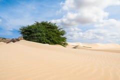 Las dunas de arena en Viana abandonan - Deserto de Viana en Boavista - el cabo Foto de archivo