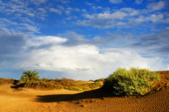 Las Dunas des Maspalomas Royalty Free Stock Photos