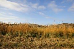 Las dunas holandesas secan el fondo amarillo rojo de la hierba y el cielo azul Imagen de archivo libre de regalías