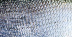 Las escalas de pescados de la brema texturizaron la opinión de la macro del modelo de la piel Foco selectivo, campo de la profund Fotos de archivo