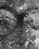 Las escaleras de las naturalezas Foto de archivo libre de regalías