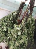 Las escobas de un abedul para un baño ruso se secan en el aire fresco Foto de archivo
