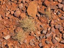 Las especies de Spinifex Triodia en roca roja emergen en la garganta de Trephina, gamas del este de MacDonnell Foto de archivo libre de regalías