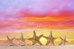 Las estrellas de mar blancas con el cielo de la salida del sol en la arena blanca varan Foto de archivo libre de regalías