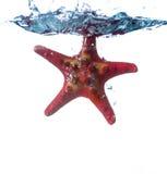 Las estrellas de mar caen en el agua Imagen de archivo libre de regalías