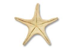 Las estrellas de mar mueven hacia atrás Imágenes de archivo libres de regalías