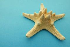 Las estrellas de mar se cierran para arriba fotos de archivo