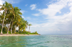 Las estrellas de mar varan, del Toro, Panamá de Bocas Fotos de archivo libres de regalías