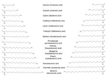 Las fórmulas estructurales químicas de los ácidos grasos saturados principales Fotografía de archivo