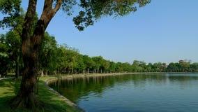 Las filas de árboles verdes iluminan el lago fotos de archivo libres de regalías