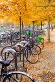Las filas de bicicletas parquearon debajo de árboles coloridos de la caída Imagen de archivo libre de regalías