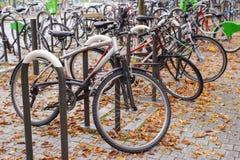Las filas de bicicletas parquearon debajo de árboles coloridos de la caída Imágenes de archivo libres de regalías