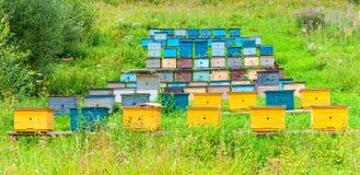 Las filas de la abeja colorida encorchan el colmenar en día de verano soleado Imagen de archivo libre de regalías