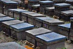 Las filas de la abeja de madera encorchan en el fondo natural Imagen de archivo