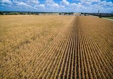 Las filas y las filas de cosechas marrones colocan tiempo de verano de la vida de la conclusión en Texas Drought Imágenes de archivo libres de regalías
